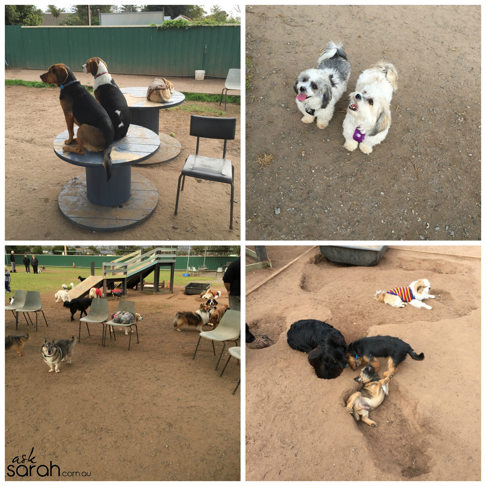 Zac & Reg Get Their Dog On At Holdfast Dog Centre!