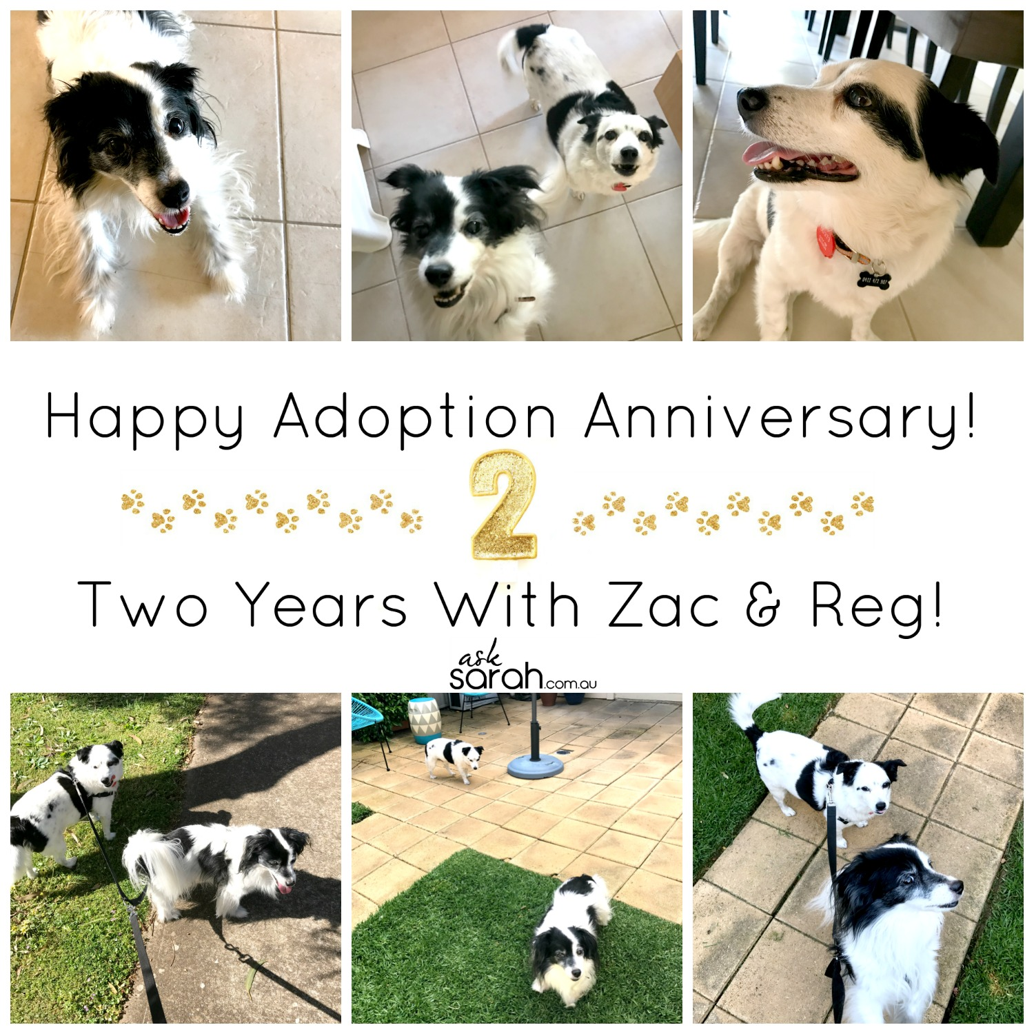 Happy Adoption Anniversary! Two Years With Zac & Reg!