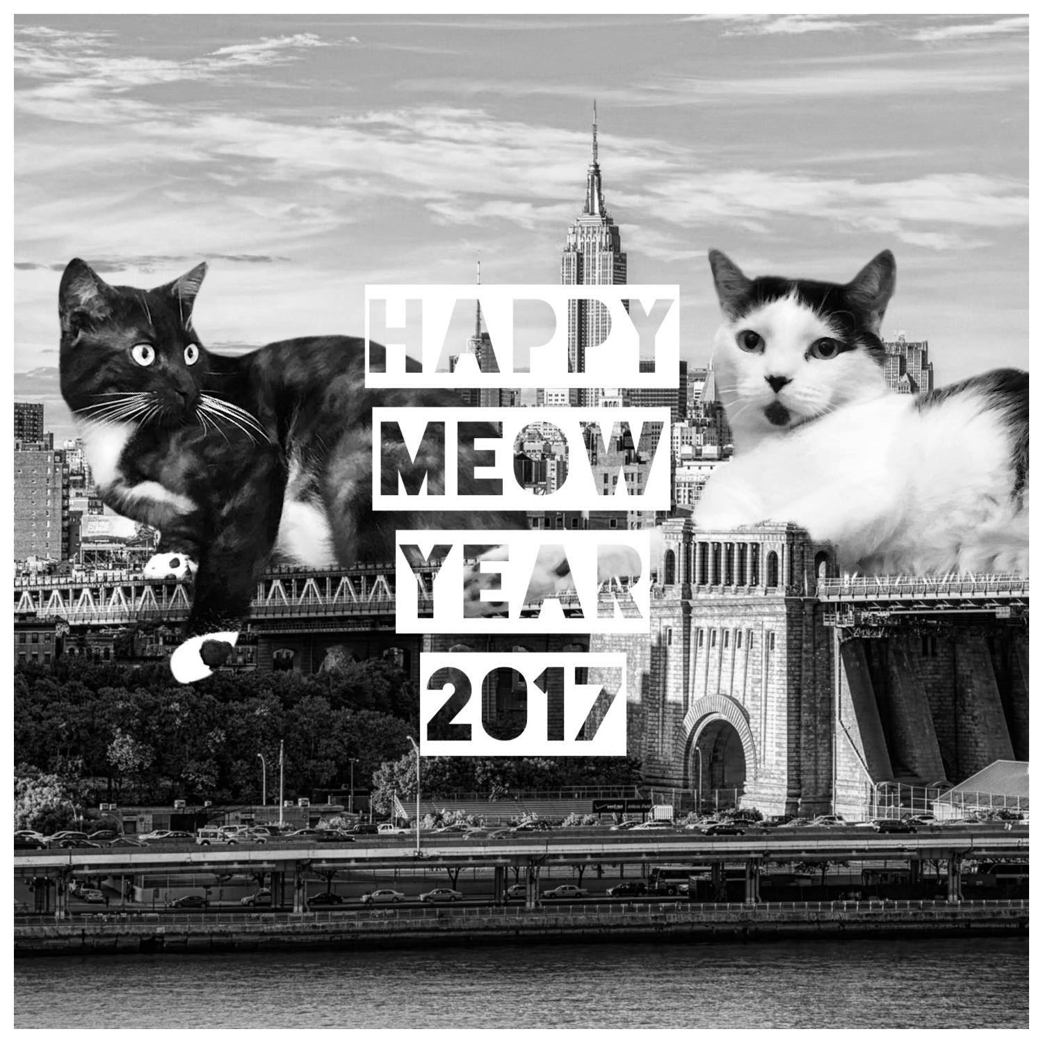 happy-new-year-2017-ask-sarah-bw